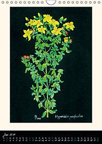 Heilkräuter in Pastell (Wandkalender 2019 DIN A4 hoch) - Produktdetailbild 6