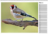 Heimische Gartenvögel Gefiederte Freunde (Wandkalender 2019 DIN A2 quer) - Produktdetailbild 2
