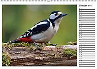 Heimische Gartenvögel Gefiederte Freunde (Wandkalender 2019 DIN A2 quer) - Produktdetailbild 1