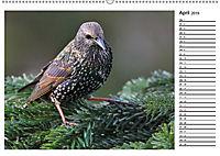 Heimische Gartenvögel Gefiederte Freunde (Wandkalender 2019 DIN A2 quer) - Produktdetailbild 7