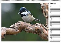 Heimische Gartenvögel Gefiederte Freunde (Wandkalender 2019 DIN A2 quer) - Produktdetailbild 6