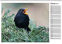 Heimische Gartenvögel Gefiederte Freunde (Wandkalender 2019 DIN A2 quer) - Produktdetailbild 11