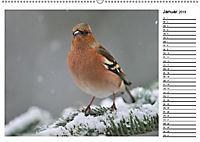 Heimische Gartenvögel Gefiederte Freunde (Wandkalender 2019 DIN A2 quer) - Produktdetailbild 10