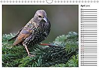 Heimische Gartenvögel Gefiederte Freunde (Wandkalender 2019 DIN A4 quer) - Produktdetailbild 4