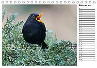 Heimische Gartenvögel Gefiederte Freunde (Tischkalender 2019 DIN A5 quer) - Produktdetailbild 2