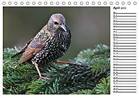 Heimische Gartenvögel Gefiederte Freunde (Tischkalender 2019 DIN A5 quer) - Produktdetailbild 4
