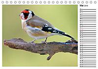 Heimische Gartenvögel Gefiederte Freunde (Tischkalender 2019 DIN A5 quer) - Produktdetailbild 5