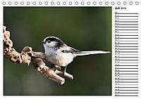 Heimische Gartenvögel Gefiederte Freunde (Tischkalender 2019 DIN A5 quer) - Produktdetailbild 7