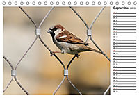 Heimische Gartenvögel Gefiederte Freunde (Tischkalender 2019 DIN A5 quer) - Produktdetailbild 9