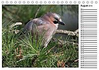 Heimische Gartenvögel Gefiederte Freunde (Tischkalender 2019 DIN A5 quer) - Produktdetailbild 8