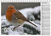 Heimische Gartenvögel Gefiederte Freunde (Tischkalender 2019 DIN A5 quer) - Produktdetailbild 12