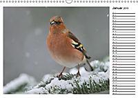 Heimische Gartenvögel Gefiederte Freunde (Wandkalender 2019 DIN A3 quer) - Produktdetailbild 1