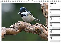Heimische Gartenvögel Gefiederte Freunde (Wandkalender 2019 DIN A4 quer) - Produktdetailbild 3