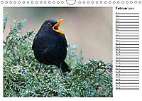 Heimische Gartenvögel Gefiederte Freunde (Wandkalender 2019 DIN A4 quer) - Produktdetailbild 2