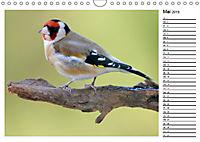 Heimische Gartenvögel Gefiederte Freunde (Wandkalender 2019 DIN A4 quer) - Produktdetailbild 5