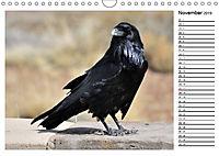 Heimische Gartenvögel Gefiederte Freunde (Wandkalender 2019 DIN A4 quer) - Produktdetailbild 11