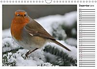 Heimische Gartenvögel Gefiederte Freunde (Wandkalender 2019 DIN A4 quer) - Produktdetailbild 12