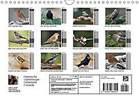 Heimische Gartenvögel Gefiederte Freunde (Wandkalender 2019 DIN A4 quer) - Produktdetailbild 13