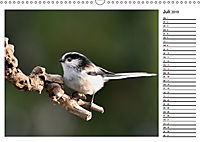 Heimische Gartenvögel Gefiederte Freunde (Wandkalender 2019 DIN A3 quer) - Produktdetailbild 7