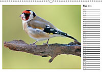 Heimische Gartenvögel Gefiederte Freunde (Wandkalender 2019 DIN A3 quer) - Produktdetailbild 5