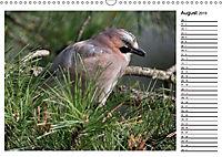 Heimische Gartenvögel Gefiederte Freunde (Wandkalender 2019 DIN A3 quer) - Produktdetailbild 8