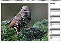 Heimische Gartenvögel Gefiederte Freunde (Wandkalender 2019 DIN A2 quer) - Produktdetailbild 4