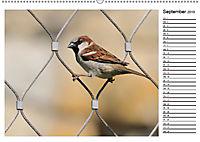Heimische Gartenvögel Gefiederte Freunde (Wandkalender 2019 DIN A2 quer) - Produktdetailbild 9