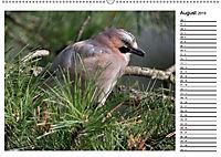 Heimische Gartenvögel Gefiederte Freunde (Wandkalender 2019 DIN A2 quer) - Produktdetailbild 8