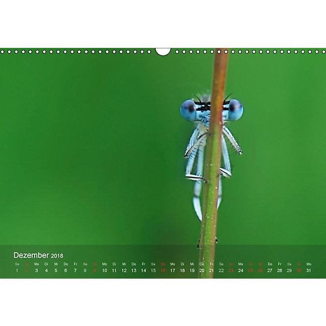 heimische insekten ganz gross wandkalender 2018 din a3 quer kalender bestellen. Black Bedroom Furniture Sets. Home Design Ideas