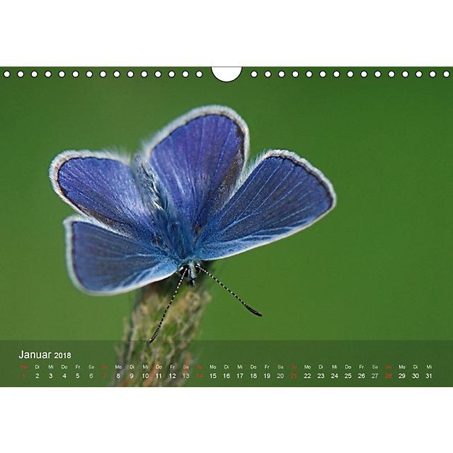 heimische insekten ganz gross wandkalender 2018 din a4 quer kalender bestellen. Black Bedroom Furniture Sets. Home Design Ideas
