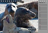 Helgoländer Kegelrobben (Tischkalender 2019 DIN A5 quer) - Produktdetailbild 2