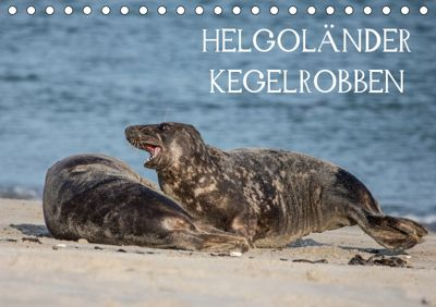 Helgoländer Kegelrobben (Tischkalender 2019 DIN A5 quer), Udo Quentin