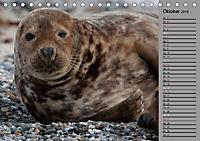 Helgoländer Kegelrobben (Tischkalender 2019 DIN A5 quer) - Produktdetailbild 10