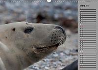 Helgoländer Kegelrobben (Wandkalender 2019 DIN A3 quer) - Produktdetailbild 3