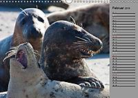 Helgoländer Kegelrobben (Wandkalender 2019 DIN A3 quer) - Produktdetailbild 2