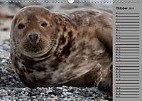 Helgoländer Kegelrobben (Wandkalender 2019 DIN A3 quer) - Produktdetailbild 10