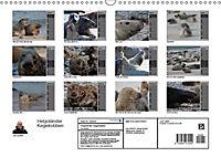Helgoländer Kegelrobben (Wandkalender 2019 DIN A3 quer) - Produktdetailbild 13