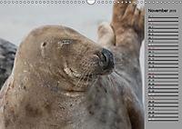 Helgoländer Kegelrobben (Wandkalender 2019 DIN A3 quer) - Produktdetailbild 11