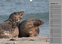 Helgoländer Kegelrobben (Wandkalender 2019 DIN A3 quer) - Produktdetailbild 1