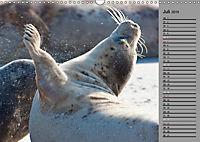 Helgoländer Kegelrobben (Wandkalender 2019 DIN A3 quer) - Produktdetailbild 7