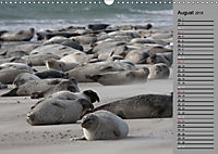 Helgoländer Kegelrobben (Wandkalender 2019 DIN A3 quer) - Produktdetailbild 8