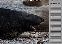 Helgoländer Kegelrobben (Wandkalender 2019 DIN A3 quer) - Produktdetailbild 12