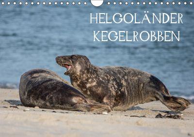 Helgoländer Kegelrobben (Wandkalender 2019 DIN A4 quer), Udo Quentin