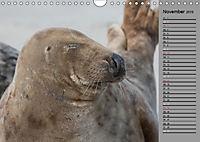 Helgoländer Kegelrobben (Wandkalender 2019 DIN A4 quer) - Produktdetailbild 11