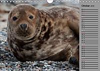 Helgoländer Kegelrobben (Wandkalender 2019 DIN A4 quer) - Produktdetailbild 10