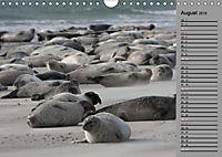 Helgoländer Kegelrobben (Wandkalender 2019 DIN A4 quer) - Produktdetailbild 8