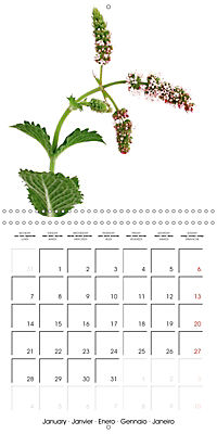 Herbs and Spices in the Kitchen (Wall Calendar 2019 300 × 300 mm Square) - Produktdetailbild 1