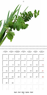 Herbs and Spices in the Kitchen (Wall Calendar 2019 300 × 300 mm Square) - Produktdetailbild 4