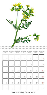 Herbs and Spices in the Kitchen (Wall Calendar 2019 300 × 300 mm Square) - Produktdetailbild 6