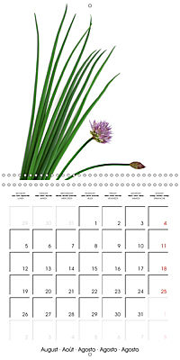 Herbs and Spices in the Kitchen (Wall Calendar 2019 300 × 300 mm Square) - Produktdetailbild 8
